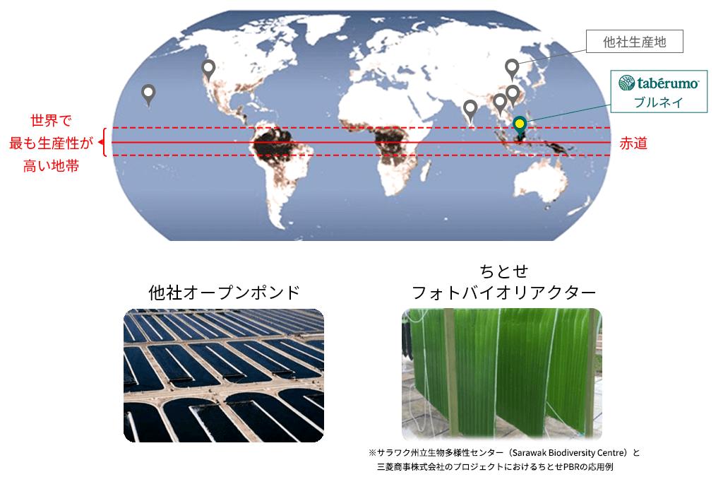 赤道直下で生産可能な培養技術を保有